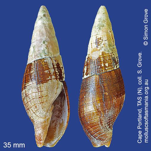 species image